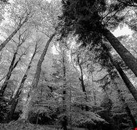 arboreto di vallombrosa