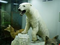 genova e il museo di storia naturale genova