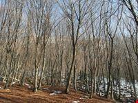 Foresta dei Violini di Paneveggio