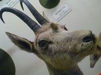 un particolare del museo di storia naturale di genova genova