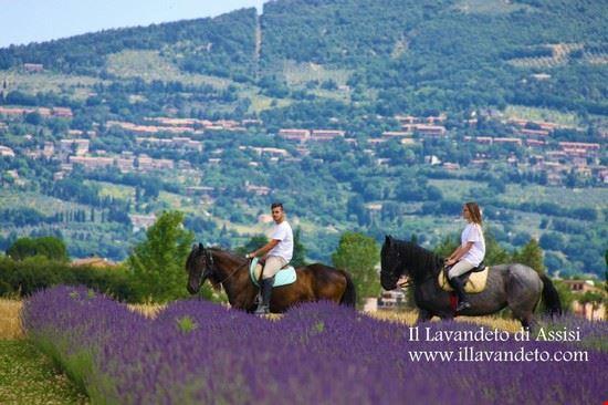 festa della lavanda italia passeggiata a cavallo assisi