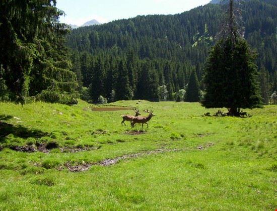 Parco Naturale di Paneveggio