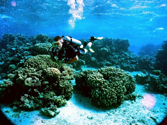 Diving in aqaba in aqaba for Aqaba dive