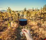 Bio_wine