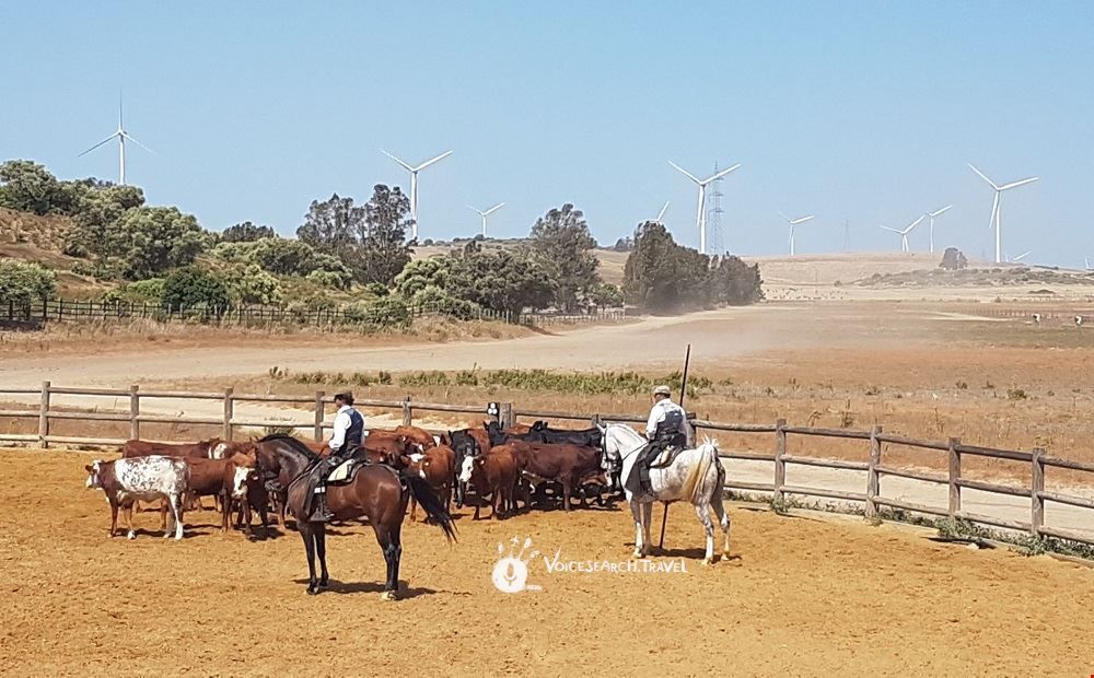 cavalli e tori spettacolo_Jerez