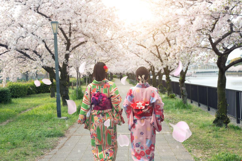 Geisha_683669563