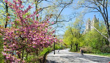 New York Central Park_394645039