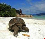 praslin_curieuse_island