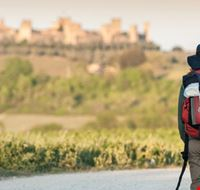 Via Francigena Canva