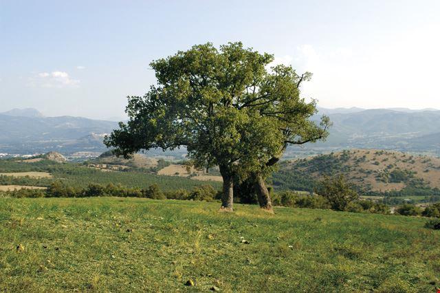 Masseria San Michele