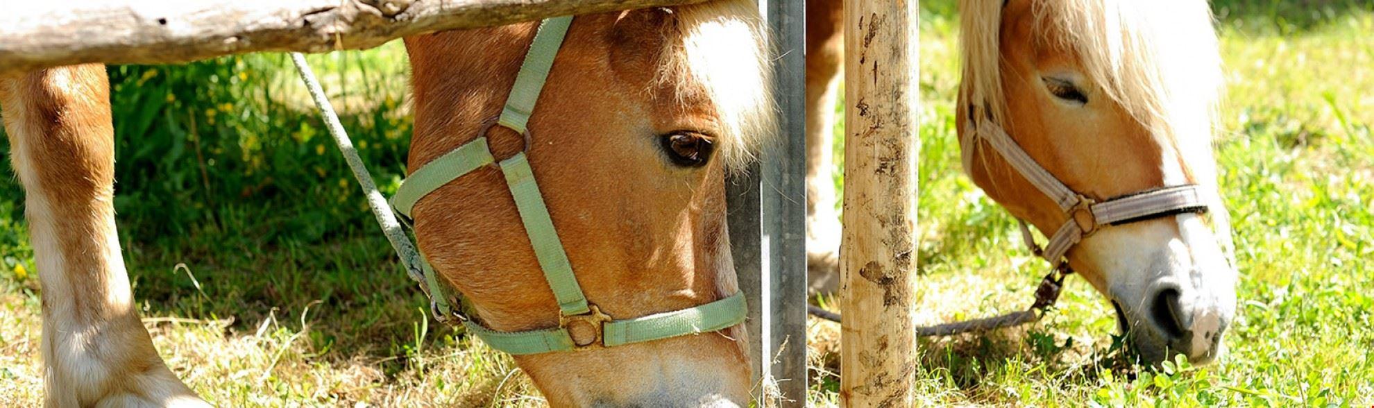 Agricampeggio con cavalli