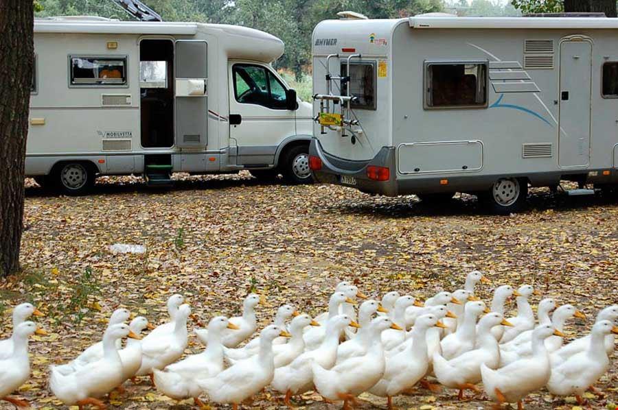 Camping Falconera