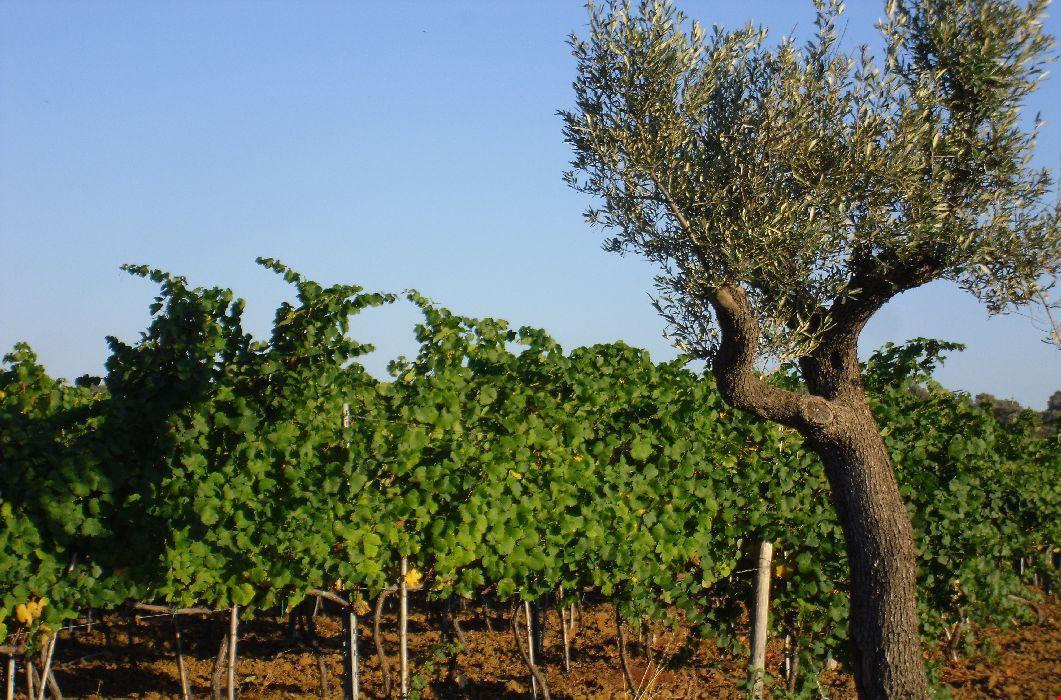 Villaggio a Cirò Marina, Calabria