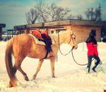 In compagnia dei cavalli