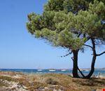 Camping Village a Calvi, Corsica