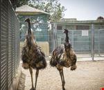Animali al Devesa Gardens Camping & Bungalows