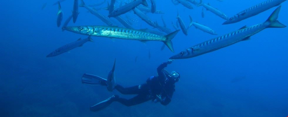Diving all'Isola d'Elba al Camping Sole e Mare