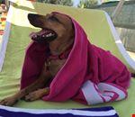 Villaggio Pet Friendly con Dog Beach nelle Marche