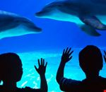 Acquario con delfini